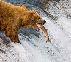 bear with fish 2